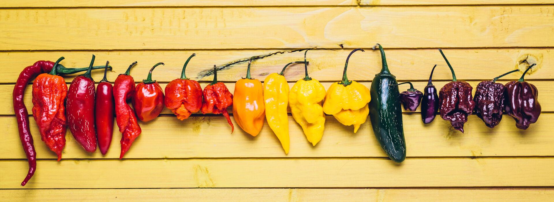 Gastrochili Chili Paprikák